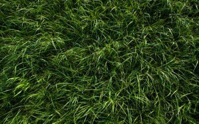 17. Mit jelent, ha a válaszod fű- és fenyőzöld?